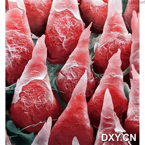 人体舌头表面