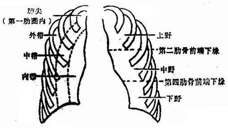 肺野的划分