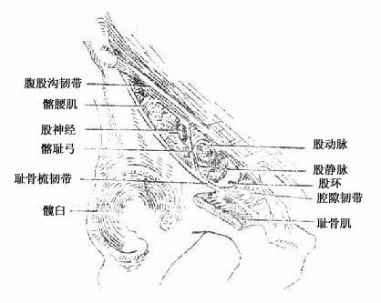 肌腔隙与血管腔隙