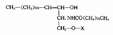 鞘磷脂的代谢