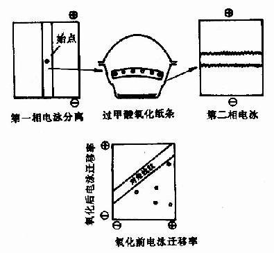 对角线电泳技术图解