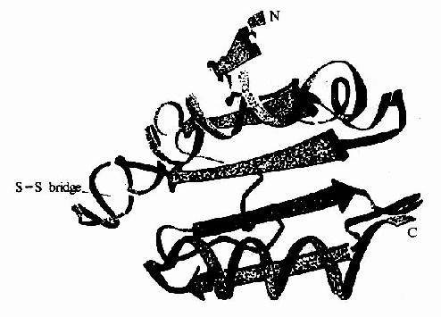 大肠杆菌硫氧化还原蛋白的X线衍射结构