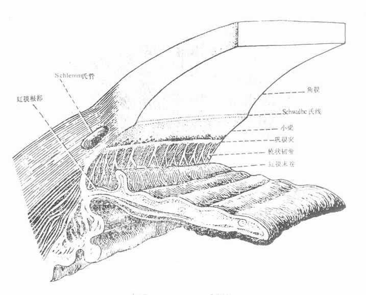 前房角模型图