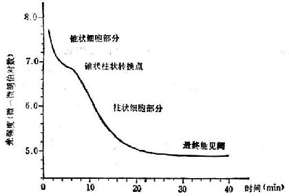 标准暗适应曲线