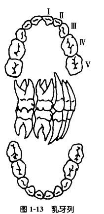 Tutu14.jpg