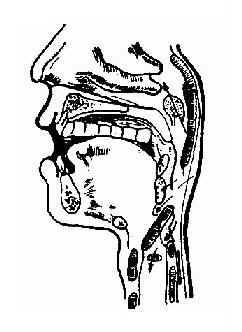 咽异物常见位置