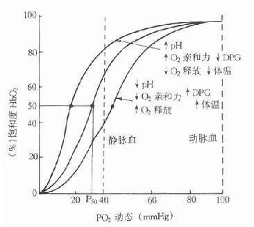 正常人血红蛋白氧解离曲线
