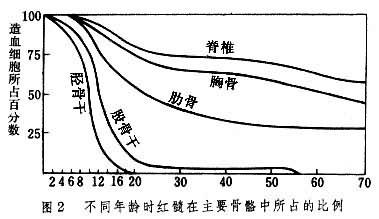 不同年龄时红髓在主要骨骼中所占的比例