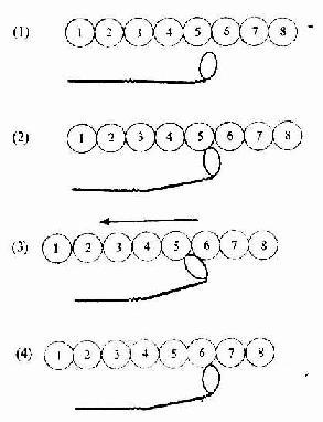 骨骼肌纤维收缩的分子结构图解