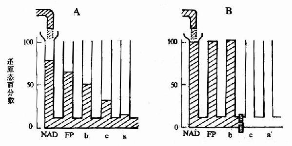 各种传递体的标准氧化还原电位