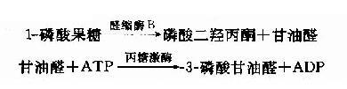 Gra3163v.jpg