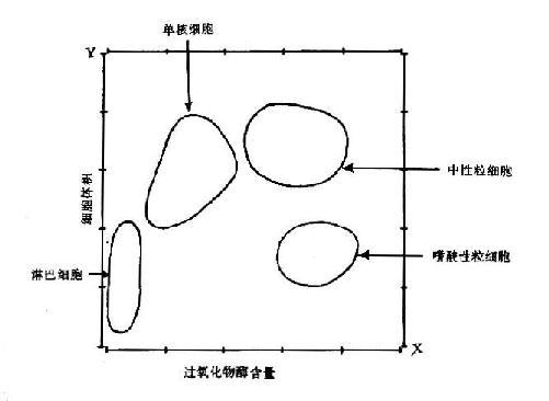 雷射與細胞化學聯合檢測白細胞直方示意圖