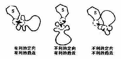 底物分子和酶活性中心上的一个催化基团在相互作用时的趋近效应