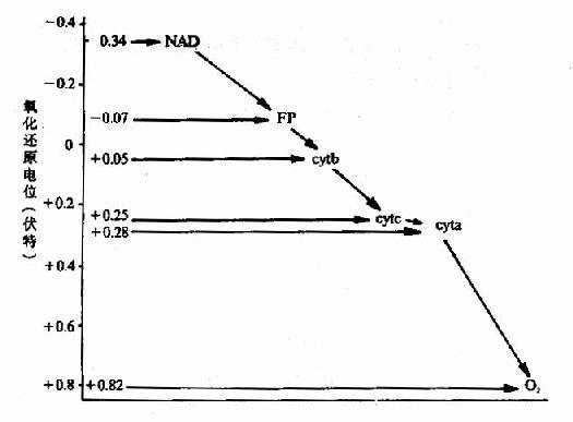 血红素A结构式