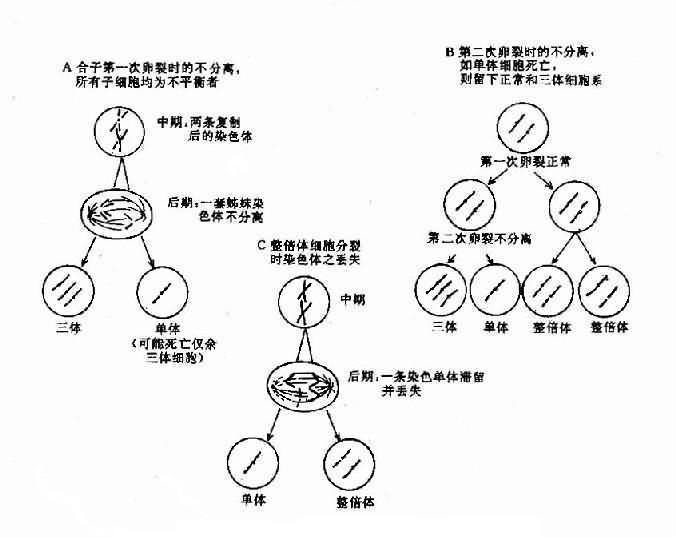 嵌合體形成的機理示意圖