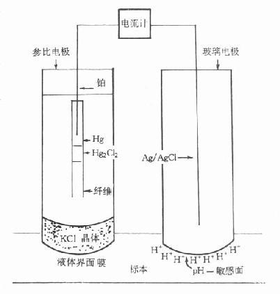 pH电极结构示意图