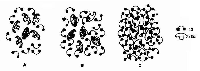酶与不同浓度的底物相互作用模式