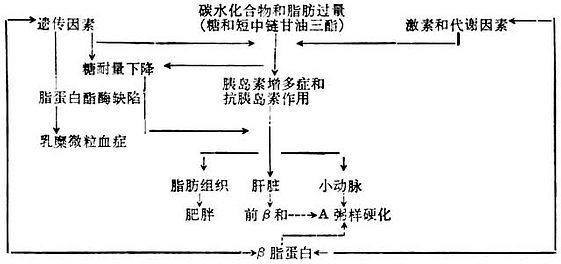 高脂蛋白血症的发生机理