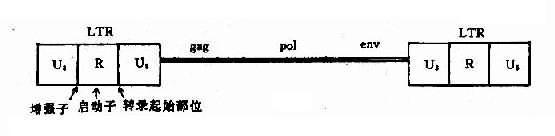Mo-MLV结构示意图