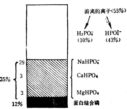 正常人血浆磷的状态