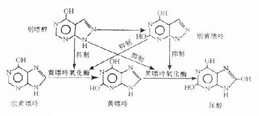 别嘌醇对黄嘌呤氧化酶的抑制