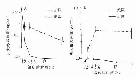 正常和无尿豚鼠庆大霉素皮下注射50mg/kg后