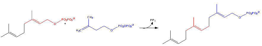 Cholesterol-Synthesis-Reaction9.png
