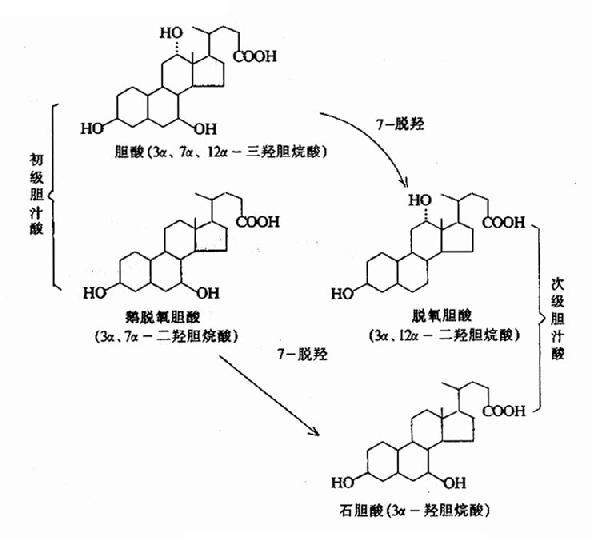 各种游离胆汁酸的结构