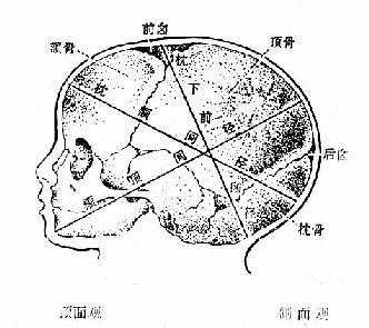 兒頭構造及各徑線圖