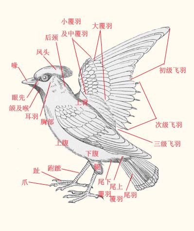 文件:Bird zh.jpg