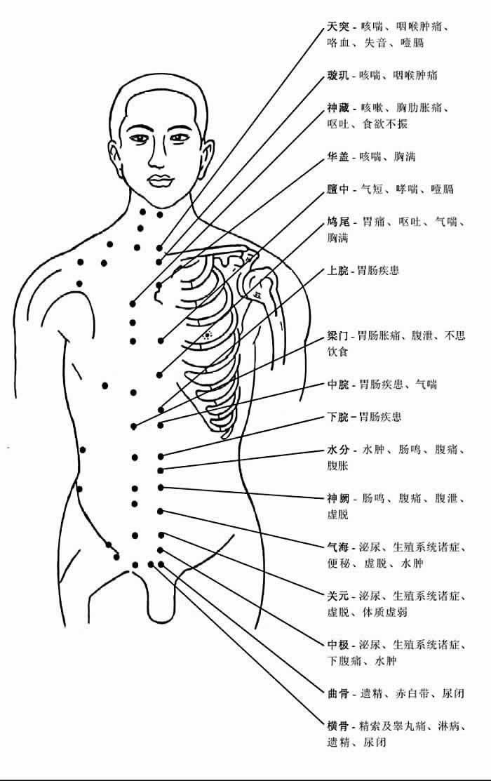 胸部穴位和穴位功能
