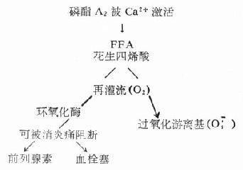 Ca2+激活磷酯A2示意图