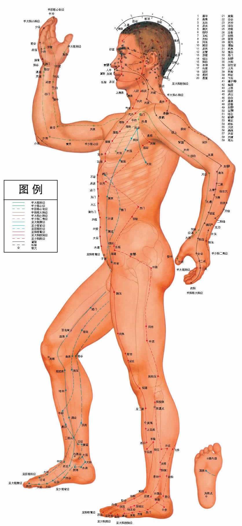 人体穴位图正面图