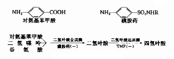 磺胺药物的抑菌作用
