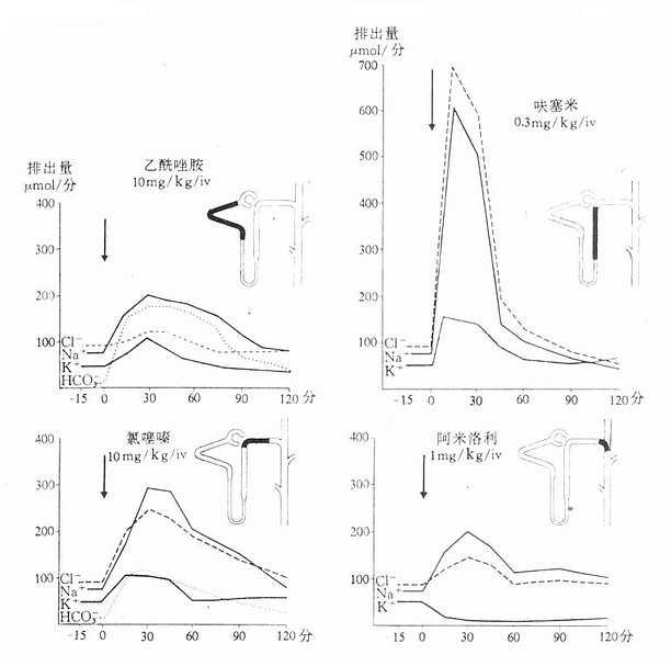 比较三类(四个药)重要利尿药的作用部位(在肾单位用黑色标记)、作用强度、作用持续时间以及不同电解质自尿中的排出量