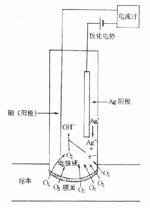 PO2电极结构示意图