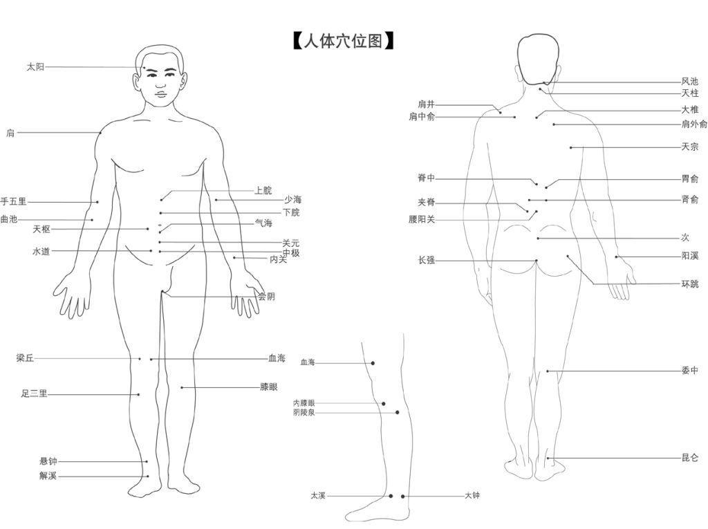 简明版人体穴位图