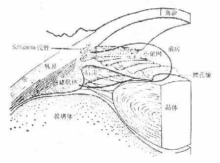 前房角的解剖与房水流出途径