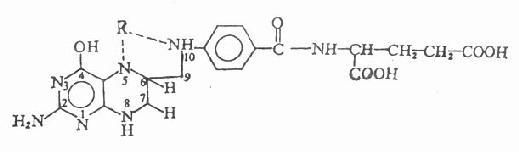 四氢叶酸及其一碳单位取代物的结构和名称