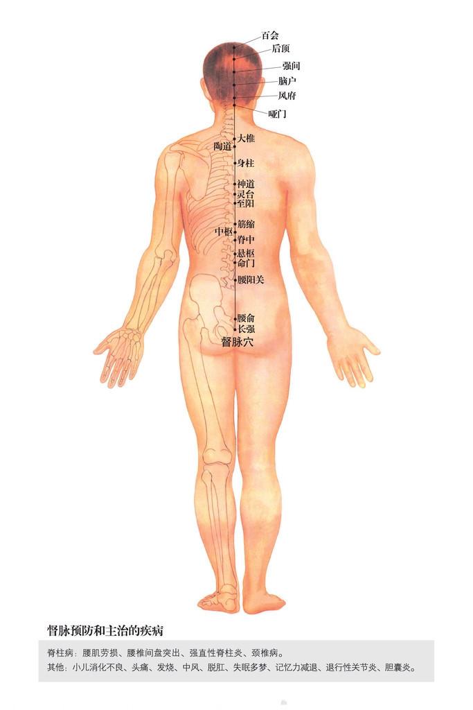 督脉穴位图
