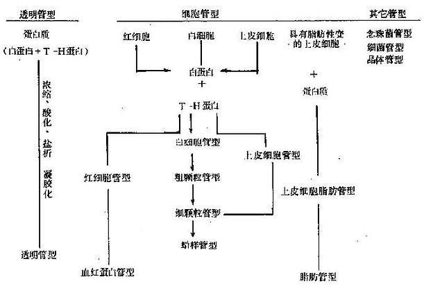管型的形成设想与分类