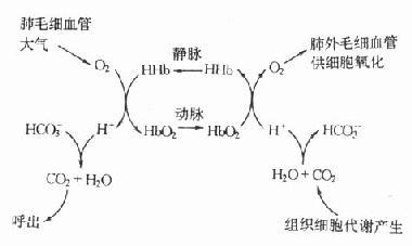 2和CO2的等氢运输