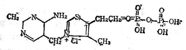 羧化辅酶(TPP)的结构式