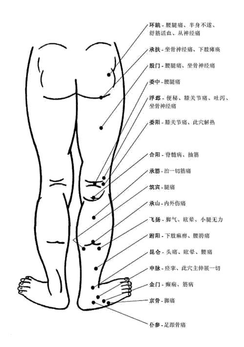 腿部穴位和穴位功能