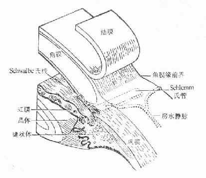 角膜缘结构示意图