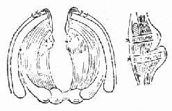 声门损伤手术方法