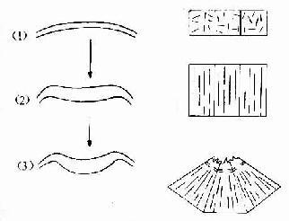神经管形成过程细胞形状与微丝、微管配布变化的关系