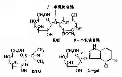 乳糖,IPTG和Xgal的结构