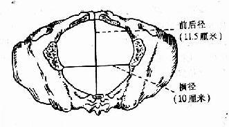 中骨盆平面各径线