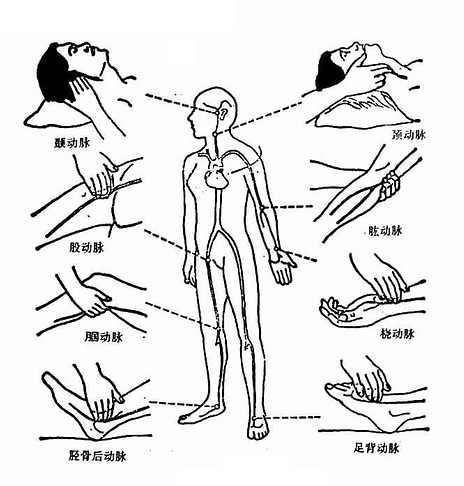 常用诊脉部位
